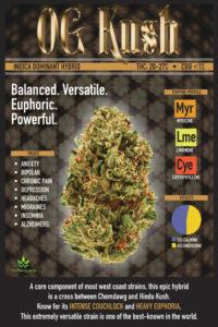 Medical Marijuana Strain Profile: OG Kush