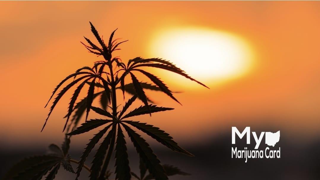 Ohio Medical Marijuana Cultivator Awarded First Cannabis B Corp