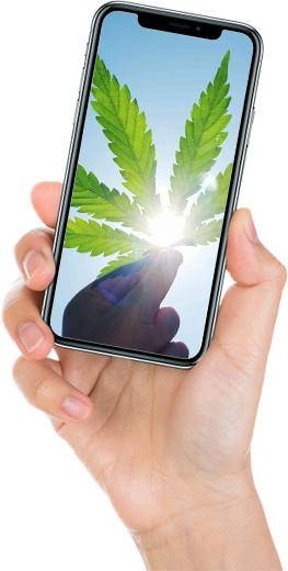 Medical Marijuana Mobile In Hand Image