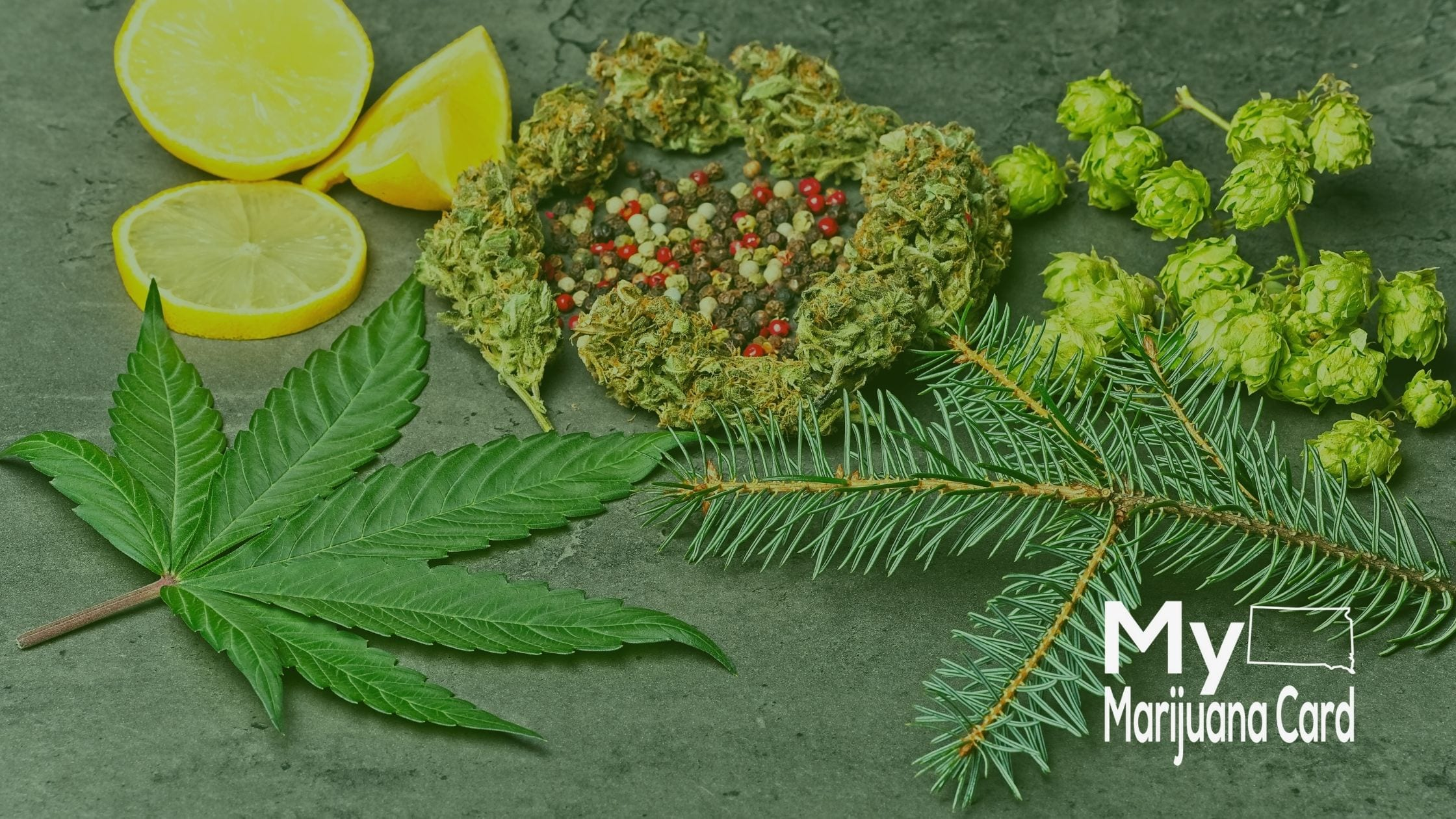 Cannabis Terpenes and Their Benefits